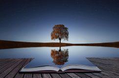 tree-reflection-1169x768
